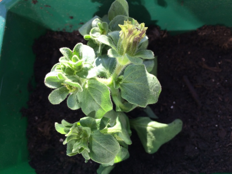 Моя посевная (или первый опыт садовода ;)