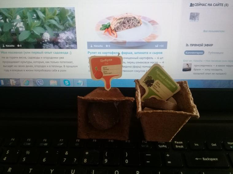 горшочек для проращивания, земляная таблека и семена