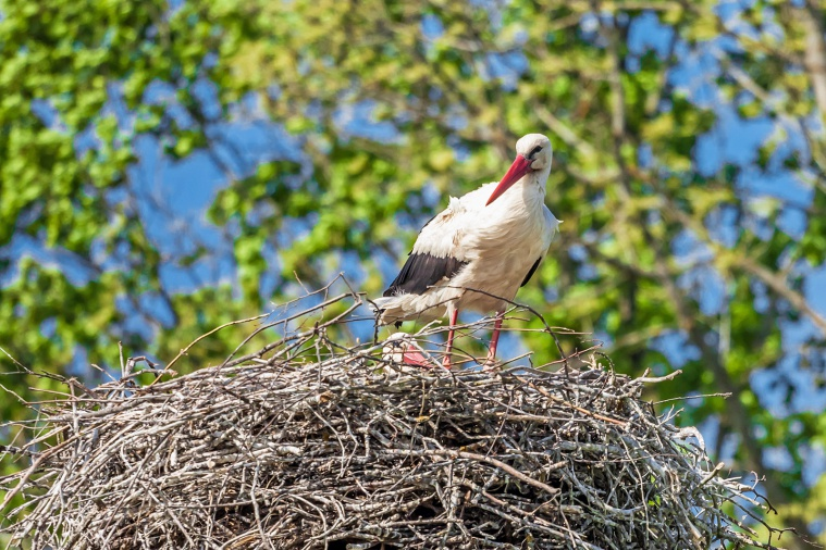 MOTORFEST Гомель 2018 едем домой, в Гомельской области много аистовых гнезд