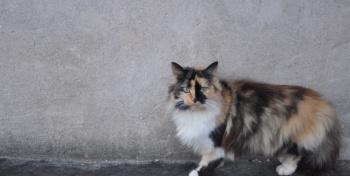 Неизбежность кота