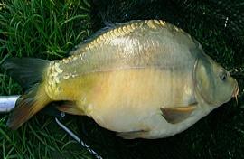 Рыбалка в Венгрии (много фото)