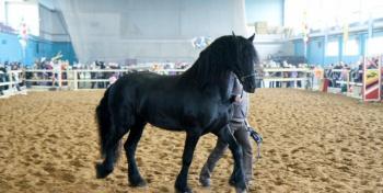 """Минск. Выставка лошадей """"Осень с HorseShow - 2014"""". 7-9 ноября"""