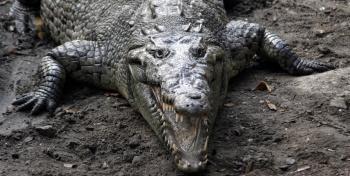 Крокодил Двинский