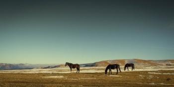 Минск. Выставка лошадей. 21-22 марта 2015