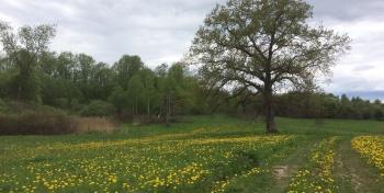Белорусский май