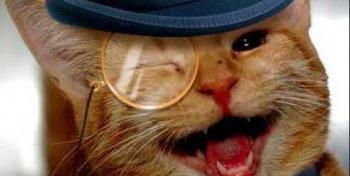 Вы любите кошек? Тогда вы шизик!!