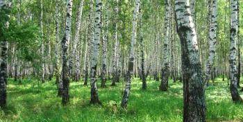 Витебск в зелёном
